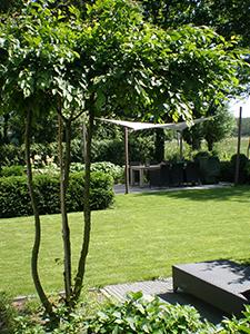 Meerstammige Bomen Tuinontwerpbureau Ineke Brunekreeft